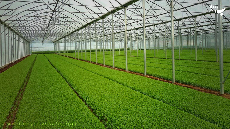 نحوه صدور مجوز قانونی برای احداث گلخانه سبزی و صیفی و گیاهان زینتی چگونه است؟