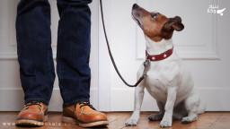 حکم نگهداری از حیوان خانگی در اپارتمان