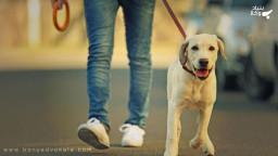 آیا صرف سگ گردانی مجازات دارد؟